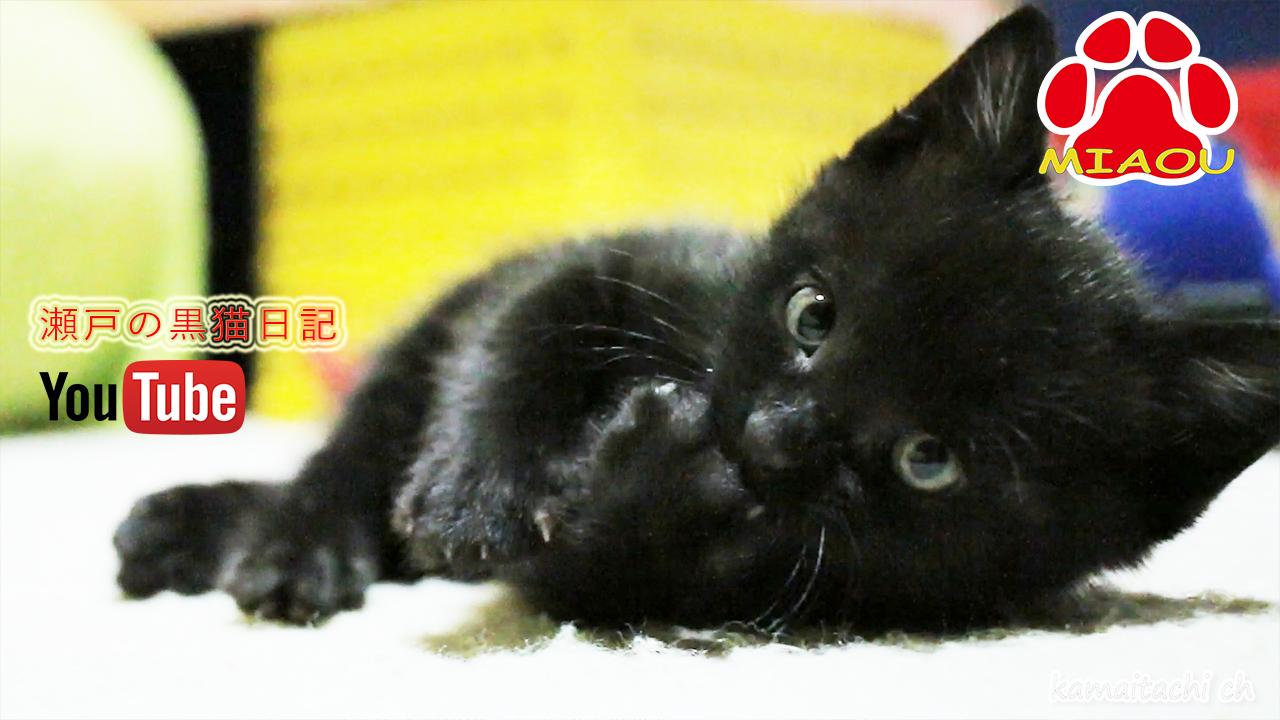 黒猫のくろ 成長記録 【瀬戸の黒猫日記】