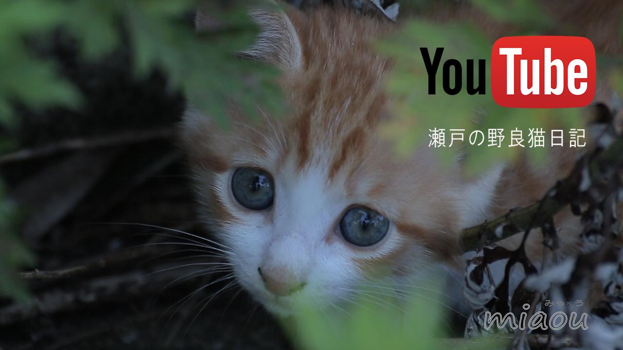 瀬戸の野良猫日記 Miaou