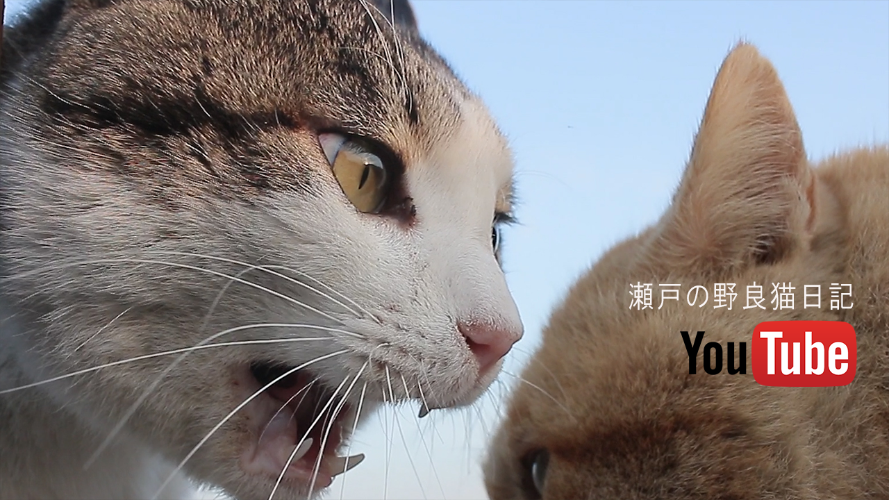 猫の喧嘩 顔が近すぎる威嚇編   【野良猫 観察記】