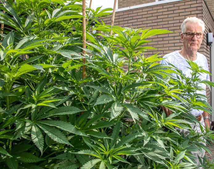 2 cannabis plants seized by the Dutch police