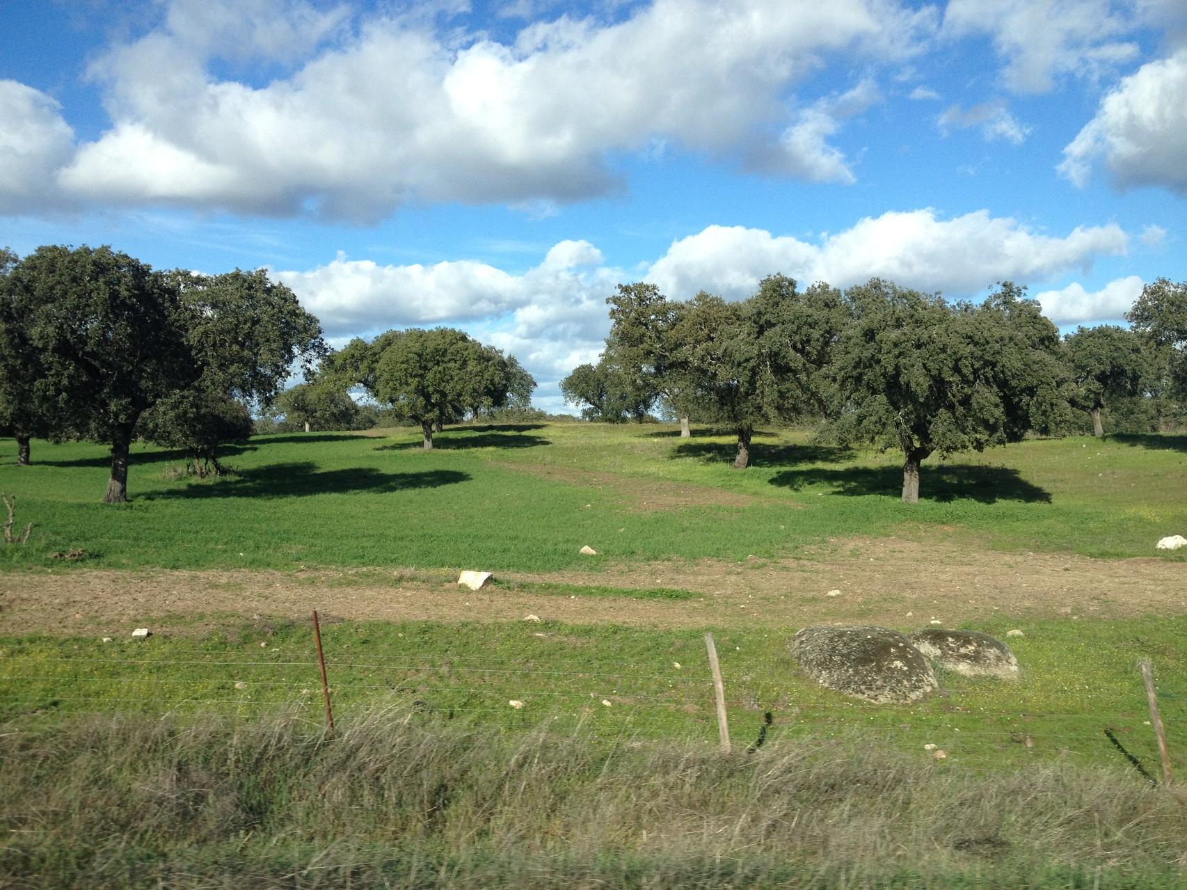 Schöne Felder