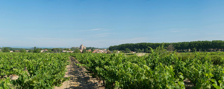 Développer la coopération pour sauver la petite viticulture, 1ère partie : Années 1930, un marasme culturel