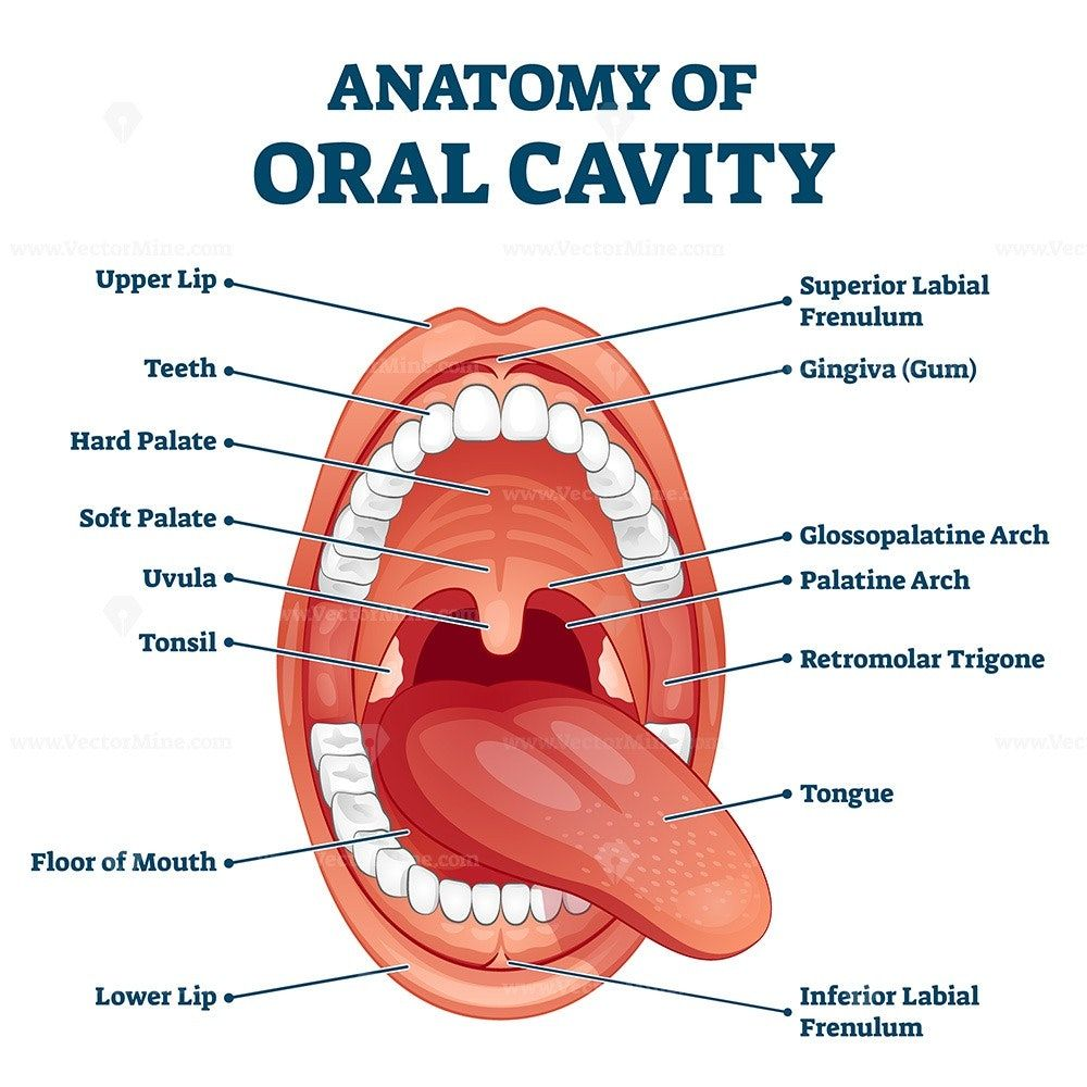 口の健康は全身の健康に直結する