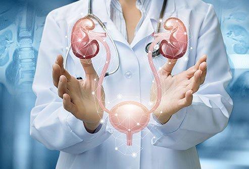 泌尿器について