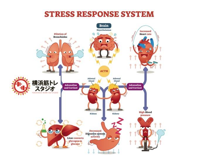 ストレス解消を適度にしてホルモンバランスをキープ