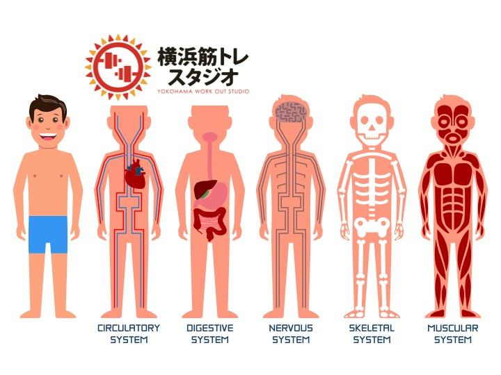 血液の循環