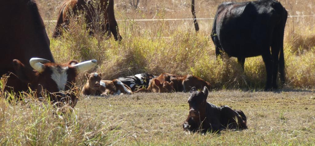 Siesta-time for the babies