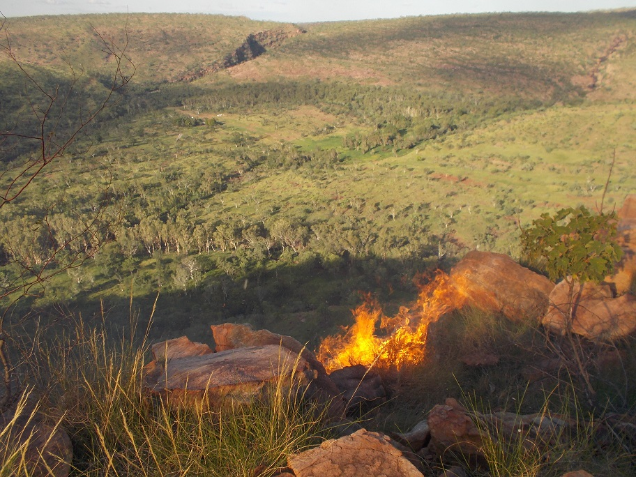 On top of the ranges we rely on wallabies to keep clean our fire-breaks