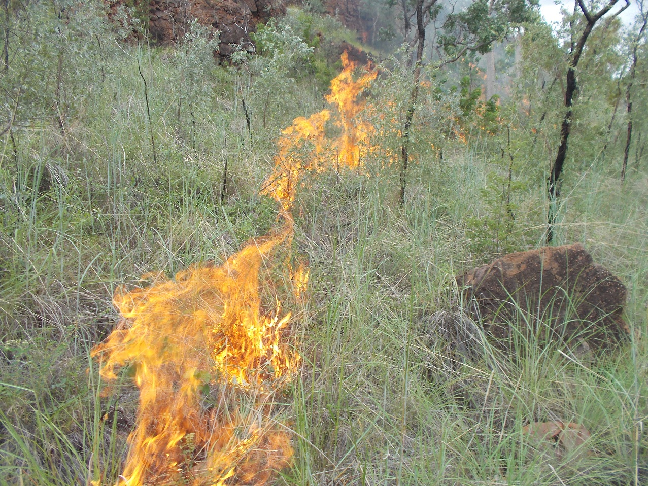Fire in the wet season still releases Carbon!