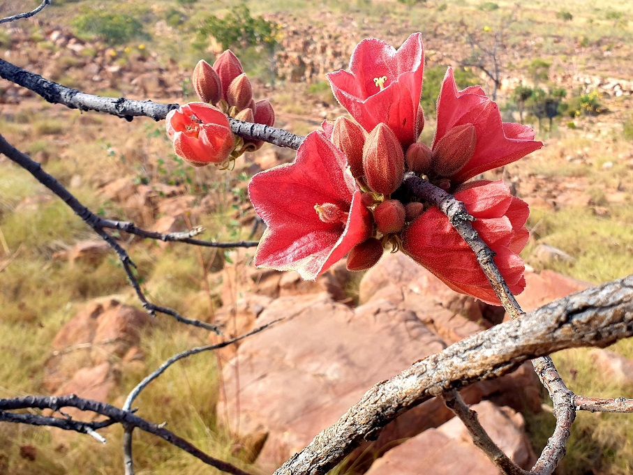 Colours of the Kimberley during winter