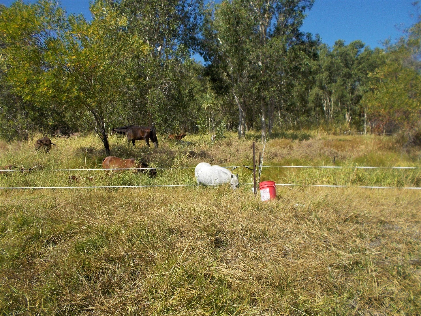 In areas where we manage to retain perennial groundcover, this water sub-irrigates pasture