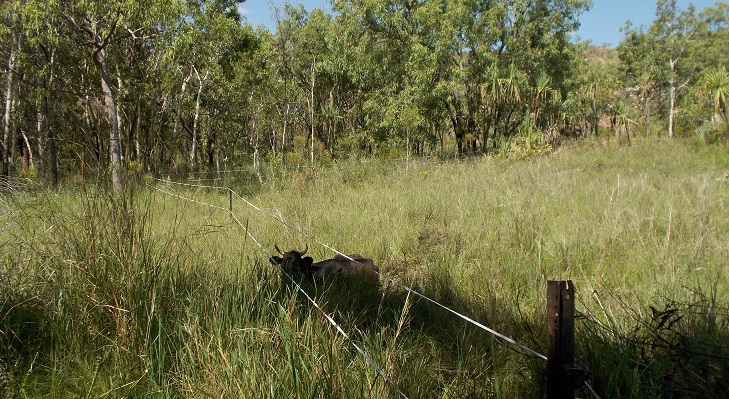 Meanwhile Charcoal's daughter was less fortunate: Bogged in the swamp!