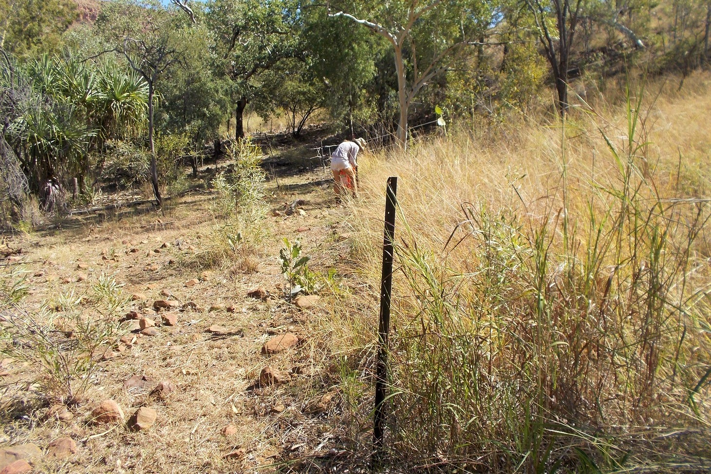 "A ""Donkey-Proof Fence"" is only as strong as the animals think it is! – In this case we had taken it down for a few days to let cattle in and not a single donkey crossed the line."