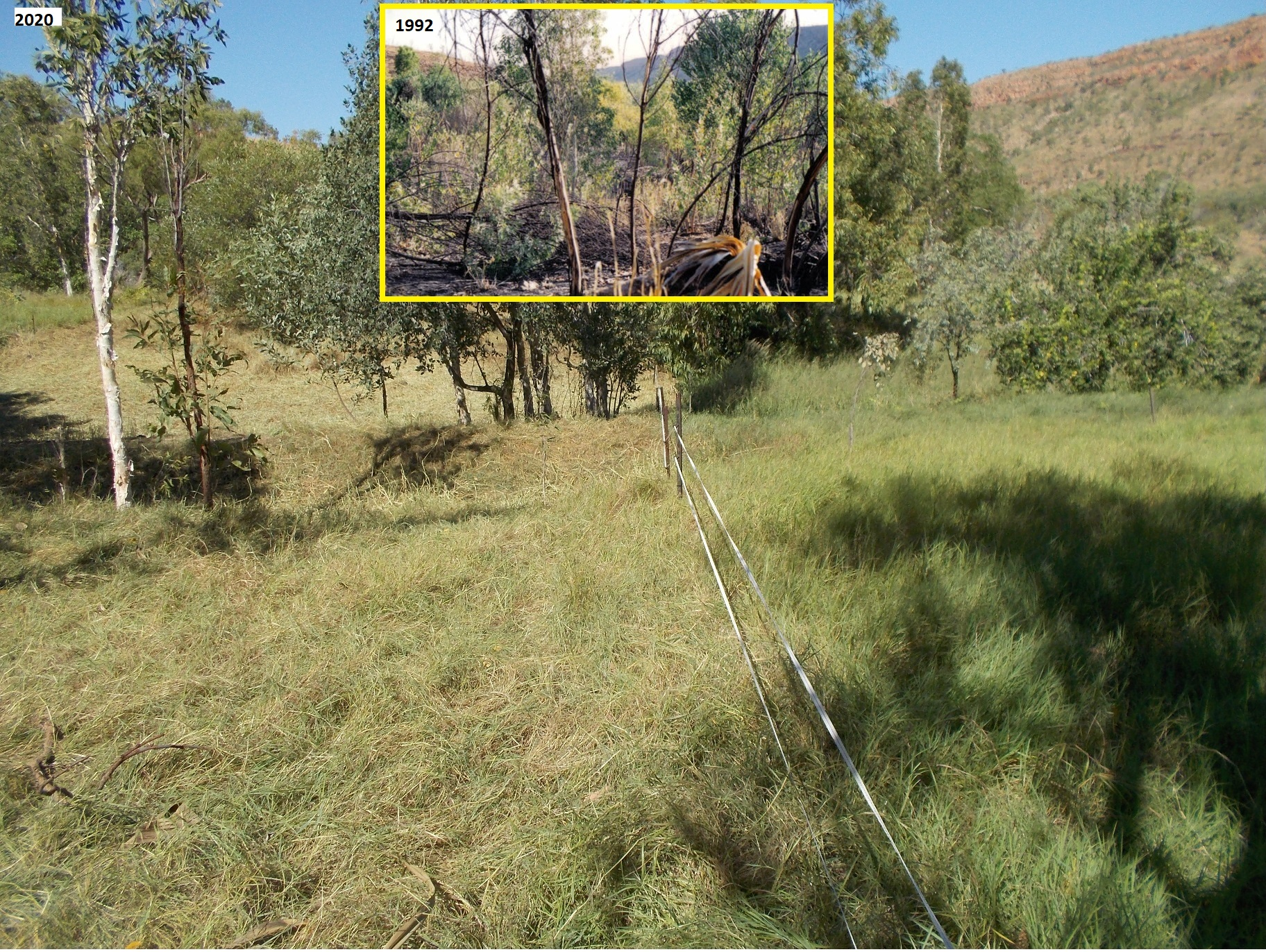 Feeding biodiversity rather than flames (Kachana Photo Monitor Site No. 3, May 2020)