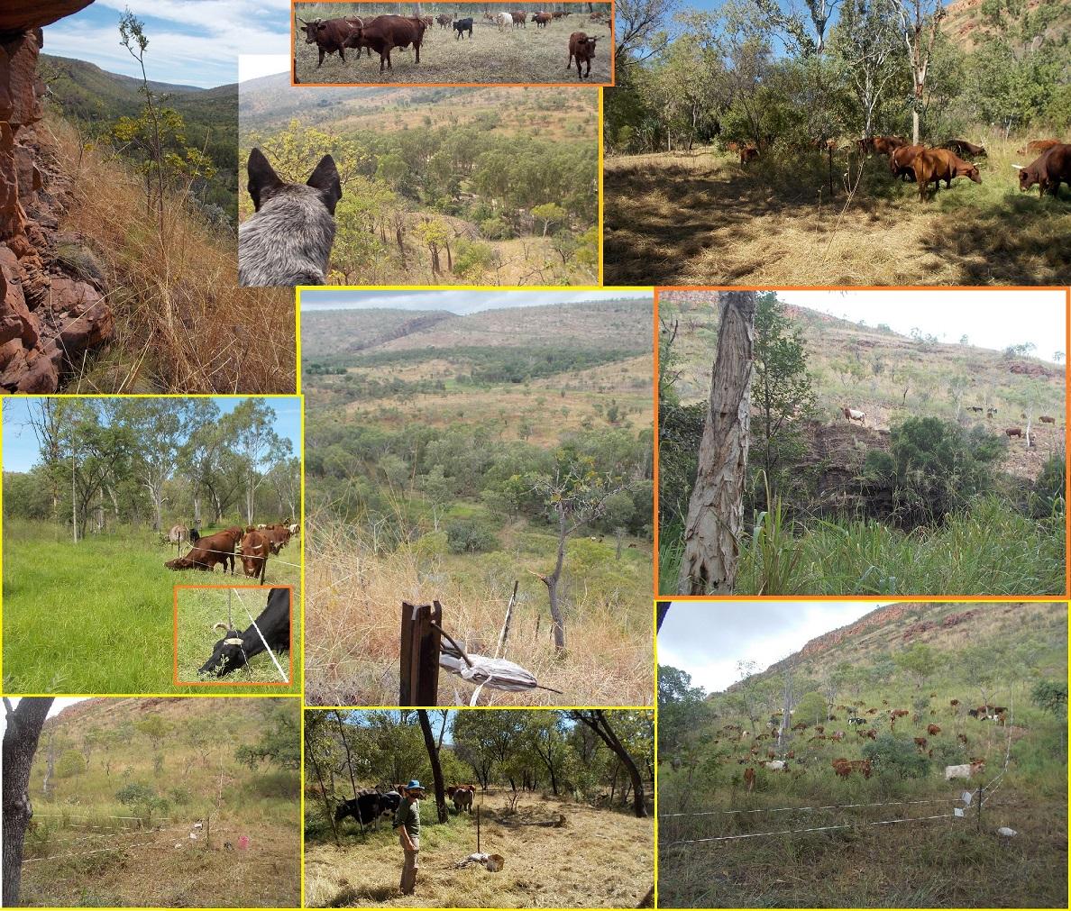 "Treating ""Kimberley Alps"" with animal-impact"