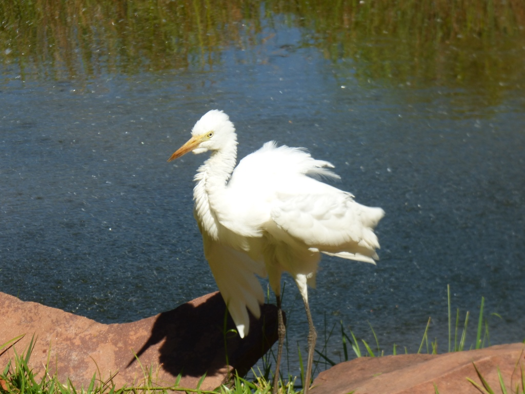 Visitor enjoying the sunshine after bathing in Lake Jacqueline