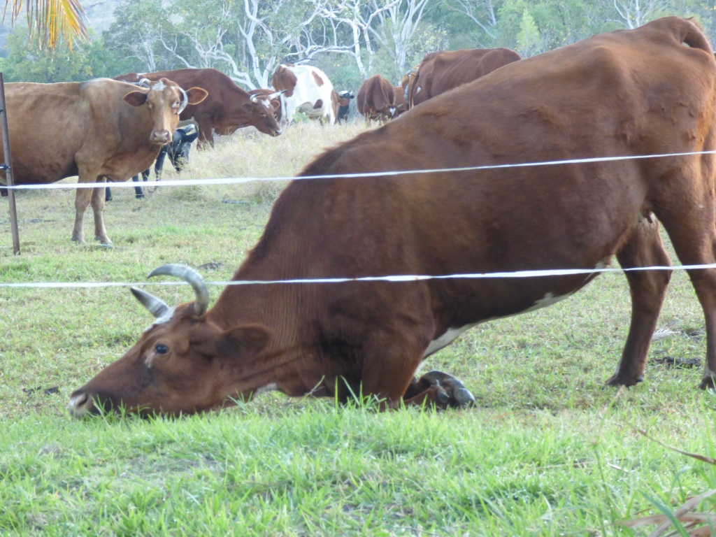 Hoggy cleaning the fence-line