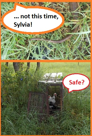 Has Sylvia really gone? Is it safe to go out now?