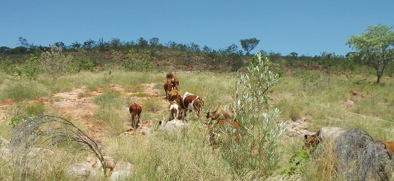 Escapees being escorted up the hillside…