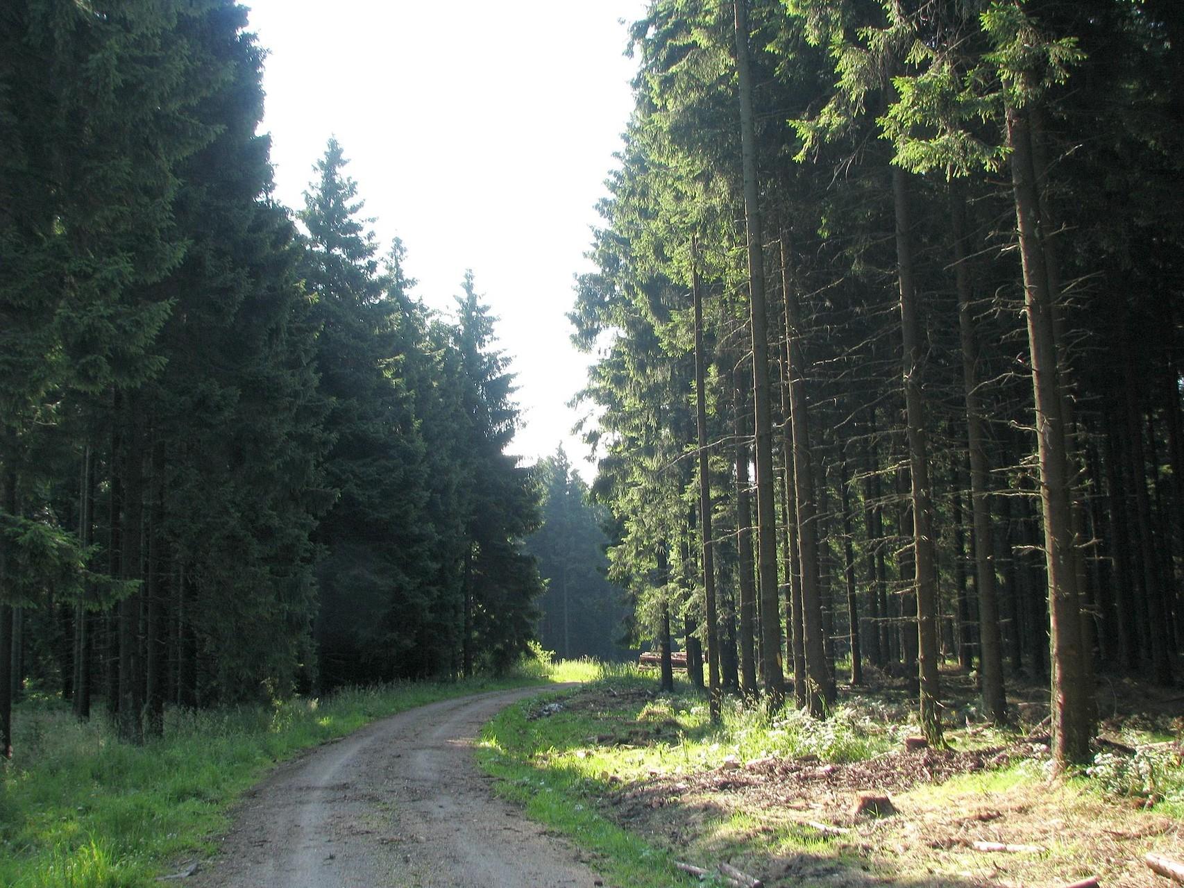 Yoga und Wandern Eifel Herbst 2014