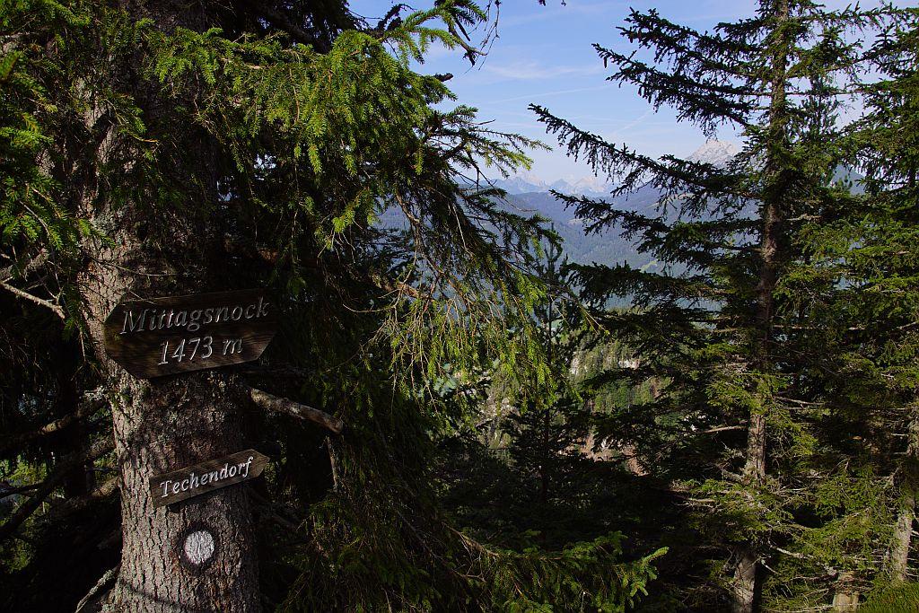 Bewaldeter Gipfel des Mittagsnocks