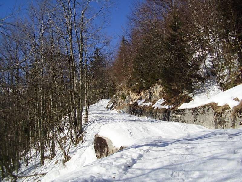 Der Aufstiegsweg durch den Wald