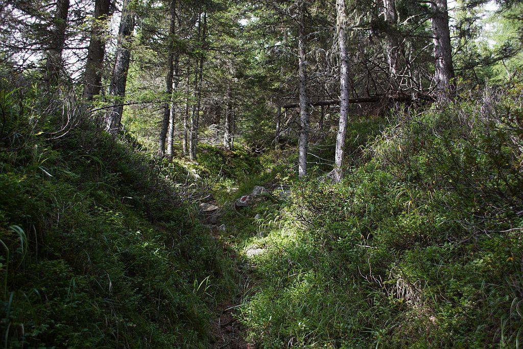Am alten Almweg zwischen Unterer und Oberer Tandlhütte