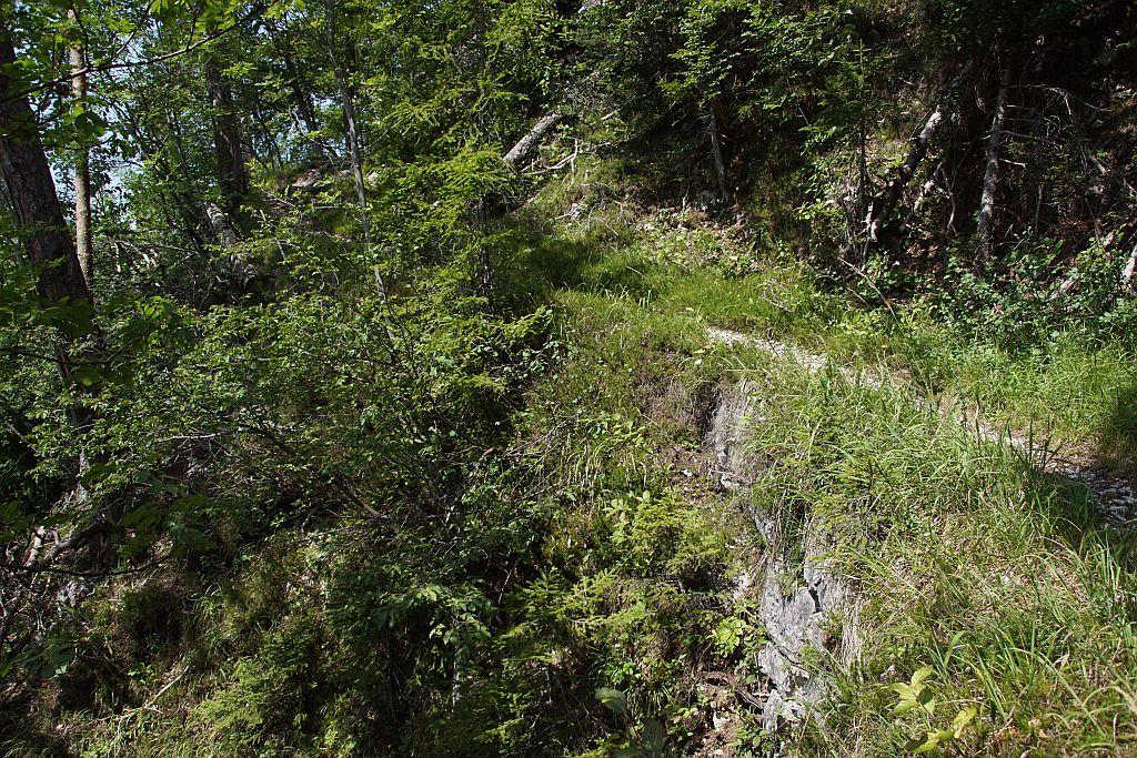 Am Waldweg (einem alten Almweg) im unteren Teil