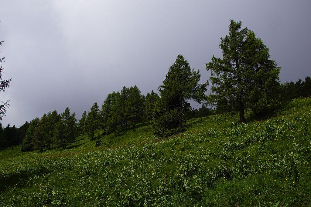 Bergwiesen unter dem Kleinen Frauenkogel