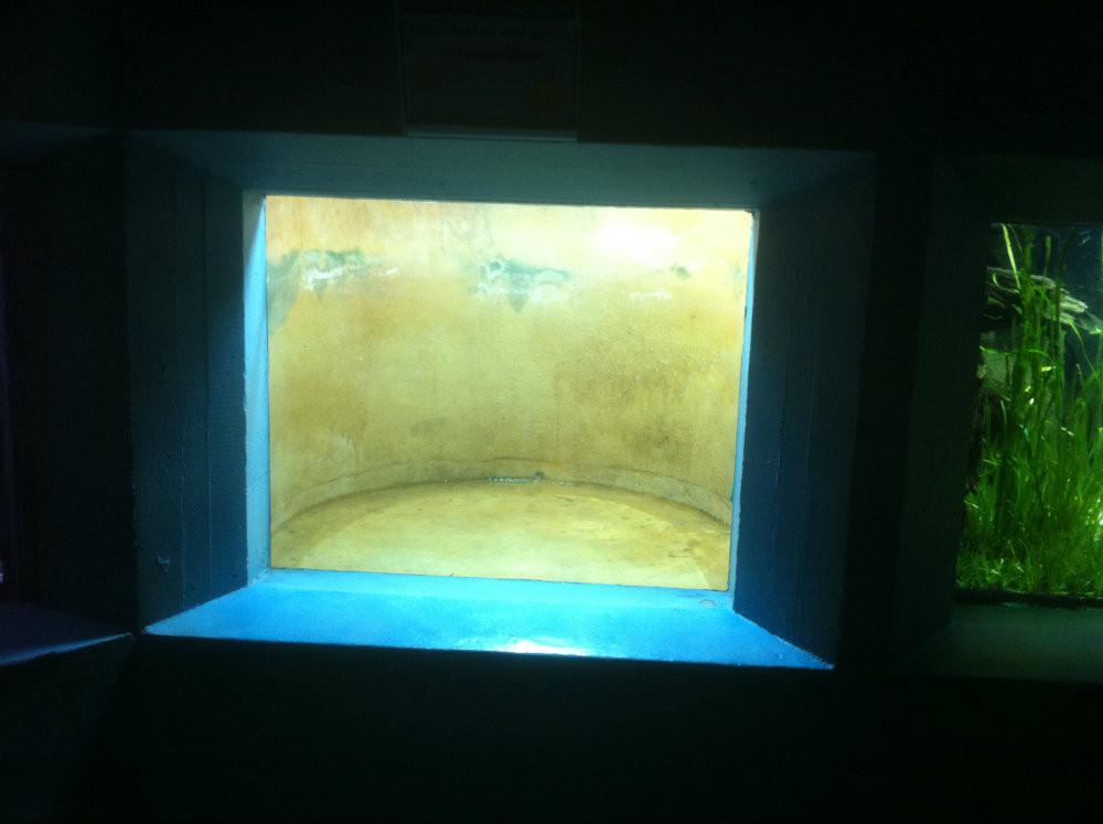 Aquarium Kratzer