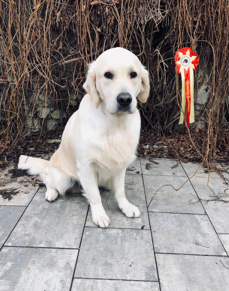 Champion of Montenegro