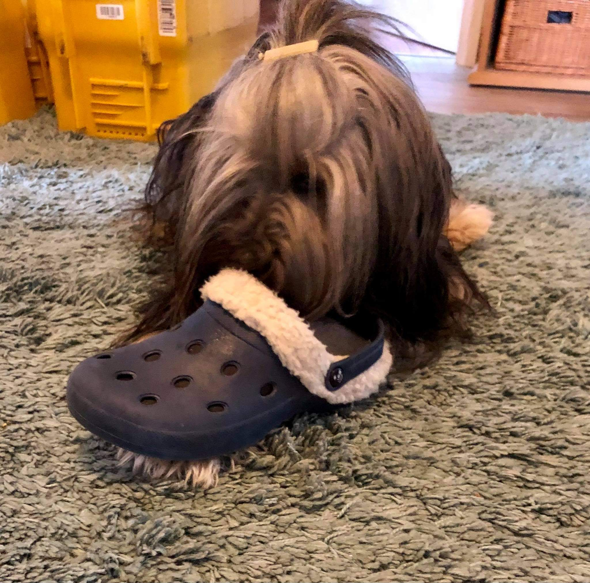 Schuhe klauen