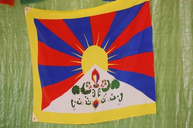 Beginn 10 Uhr - Tibet Terrier