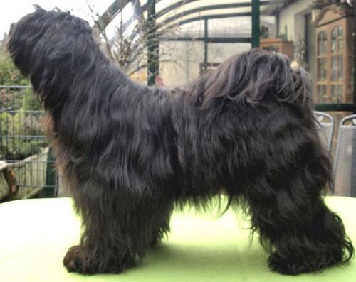 Nele's Papa: Wanted Nice Dog's Bluey Lamleh