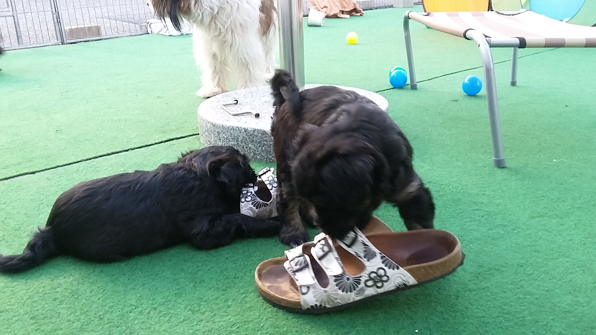 Kleine Schuhfetischisten