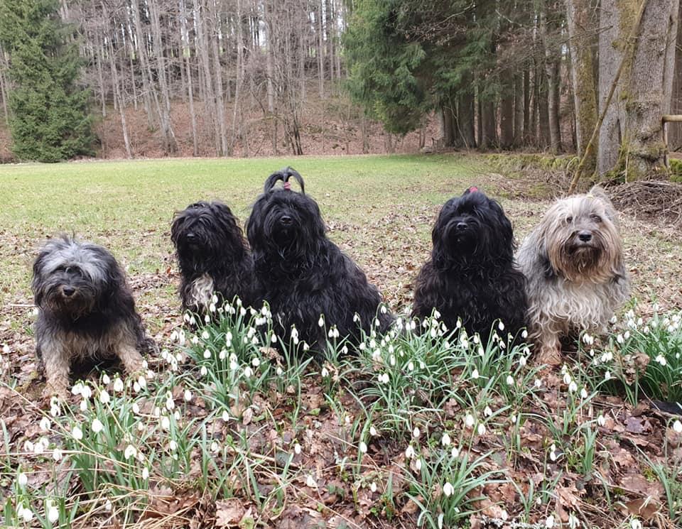 """Ein Frühlingsgruß vom anschließenden Spaziergang vom ganzen """"Chaoten"""" Trupp"""