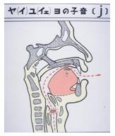 図13 半母音の舌の構え