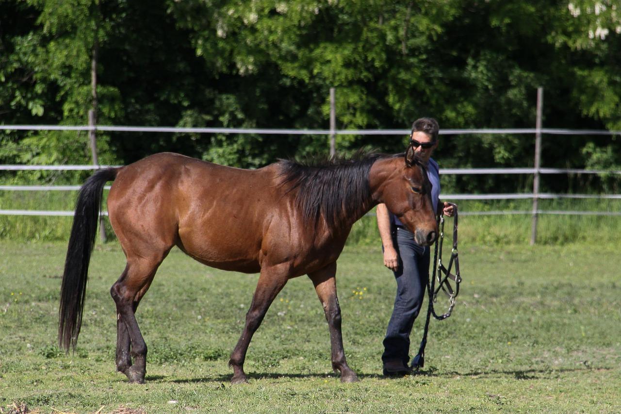Körpersprache: der Schlüssel für erfolgreiche Kommunikation zwischen Pferd und Mensch