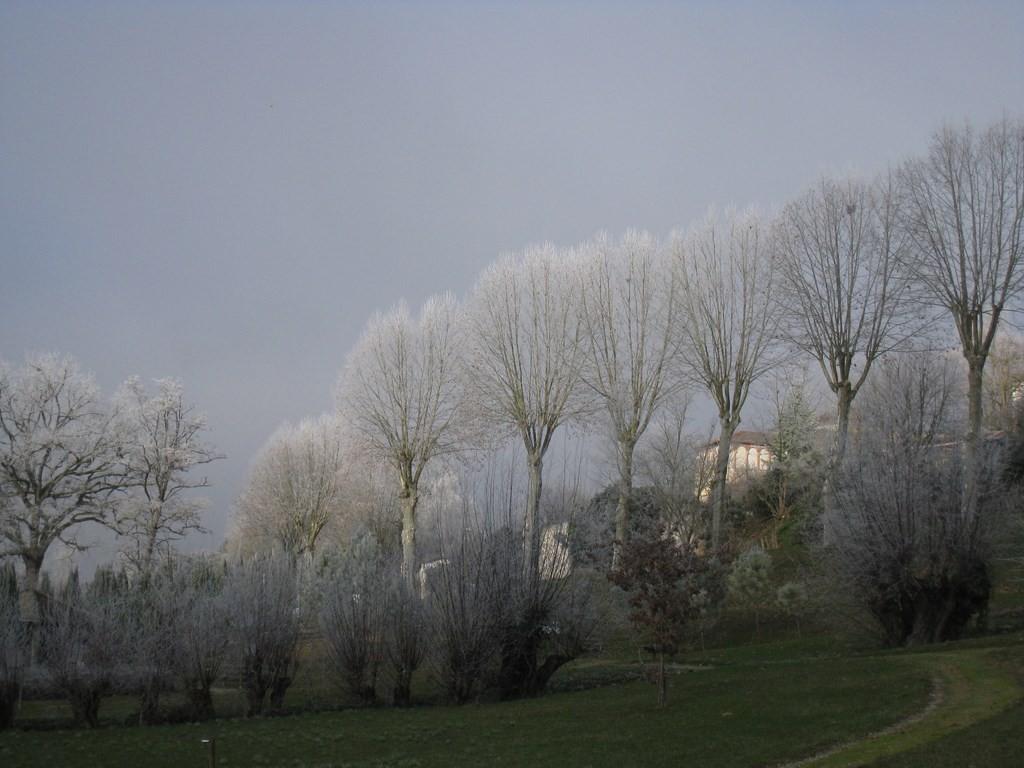 Vallée de la Gélise - Mézin le 2 janvier 2015 - Les jardins paysagers