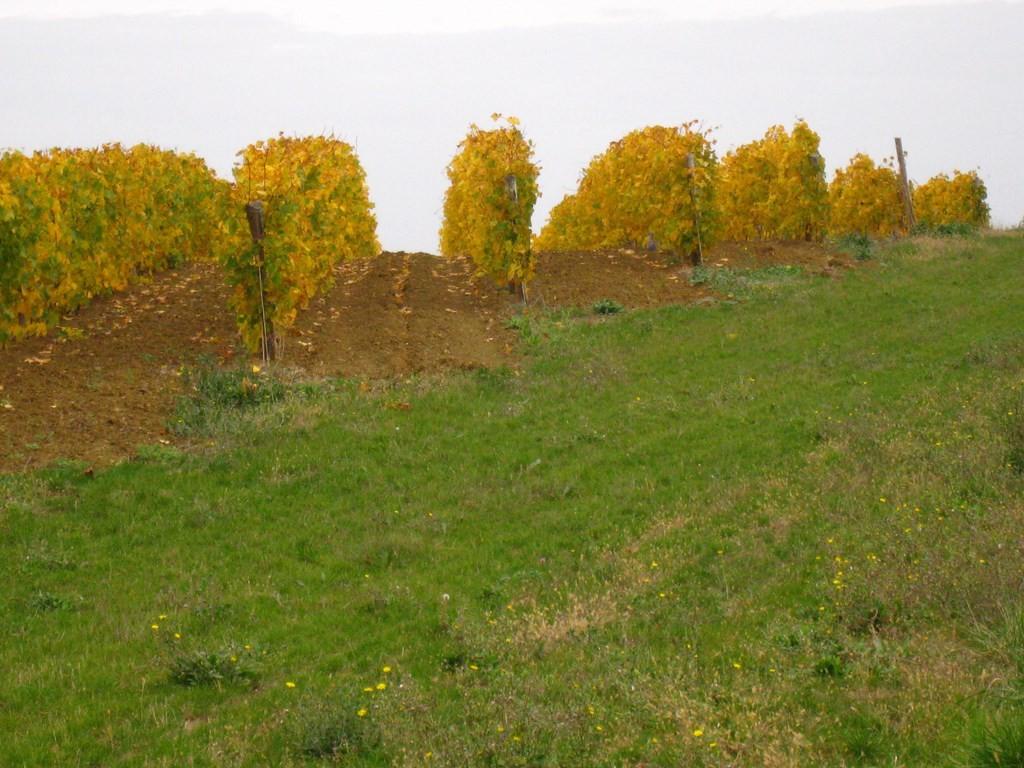 La Cave de Mézin - La douceur des coteaux striés de vigne