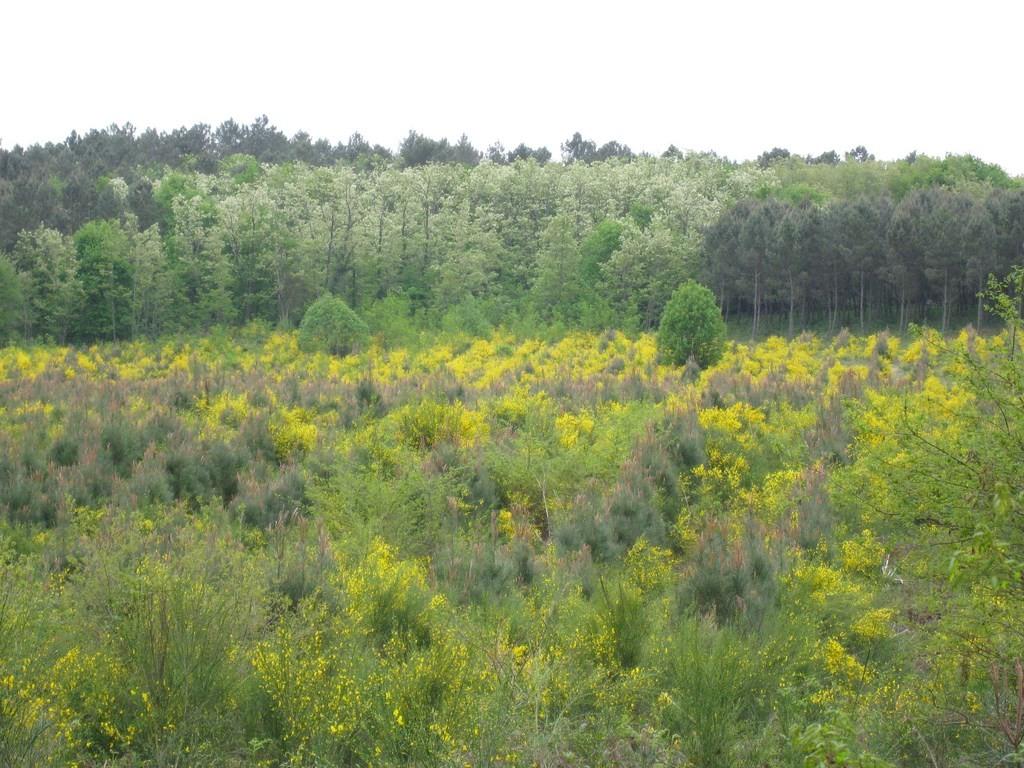 La forêt landaise... en Lot-et-Garonne !