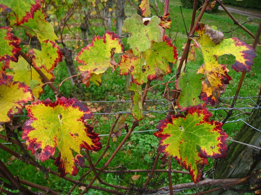 La Cave de Mézin - Les couleurs du feuillage d'automne