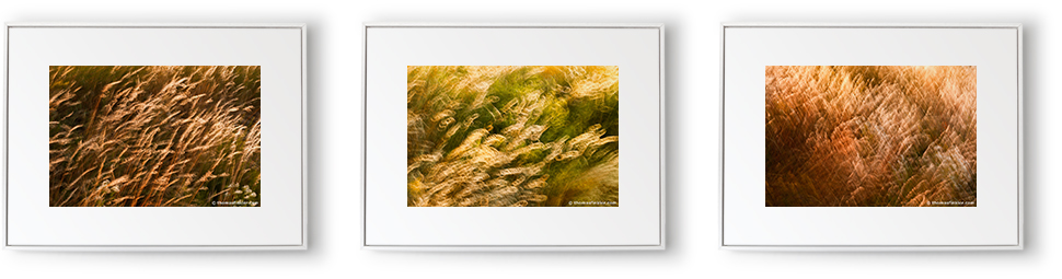 "Triptych ""grasses swaying in the wind 01, 02, 03"""
