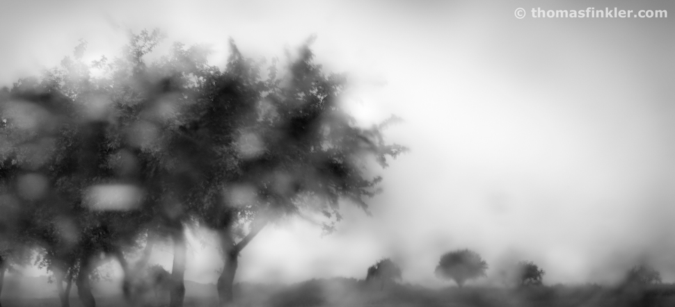 Thomas Finkler Photography, fine art black and white photography, minimal landscape, trees, field, rain, summer, monochrome, poetic
