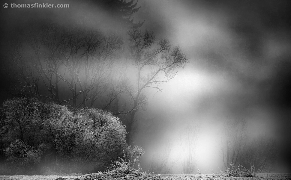 Thomas Finkler Photography, fine art nature black and white photography, monochrome, trees, misty, frosty, winter, scenery, light show, poetic