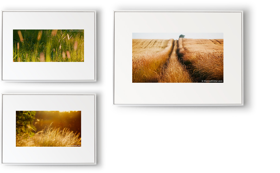 """""""Grasses 02"""" (80x60 cm), """"summer in the fields 02"""" (110x80 cm) and """"grasses in the golden light 01"""" (80x60 cm)"""