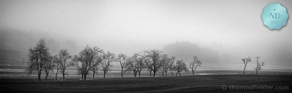 Black and white photography, fine art, awarded, award winning, nature, landscape, mist, trees, frost, silence, most beautiful, prints, for sale