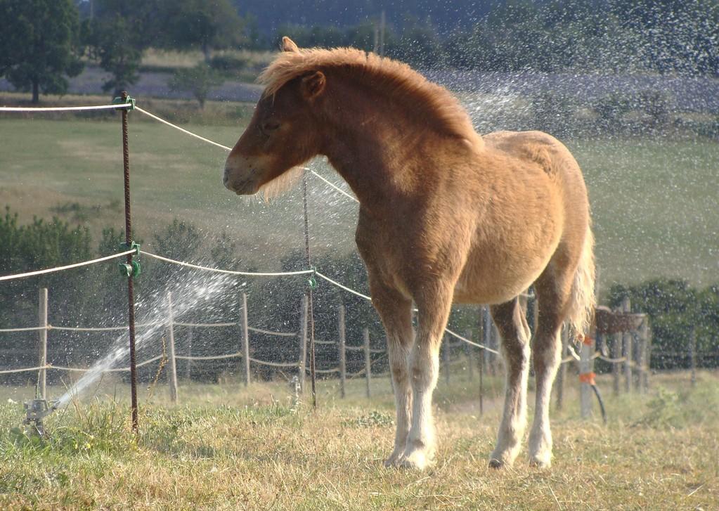 Capucine vient prendre une douche