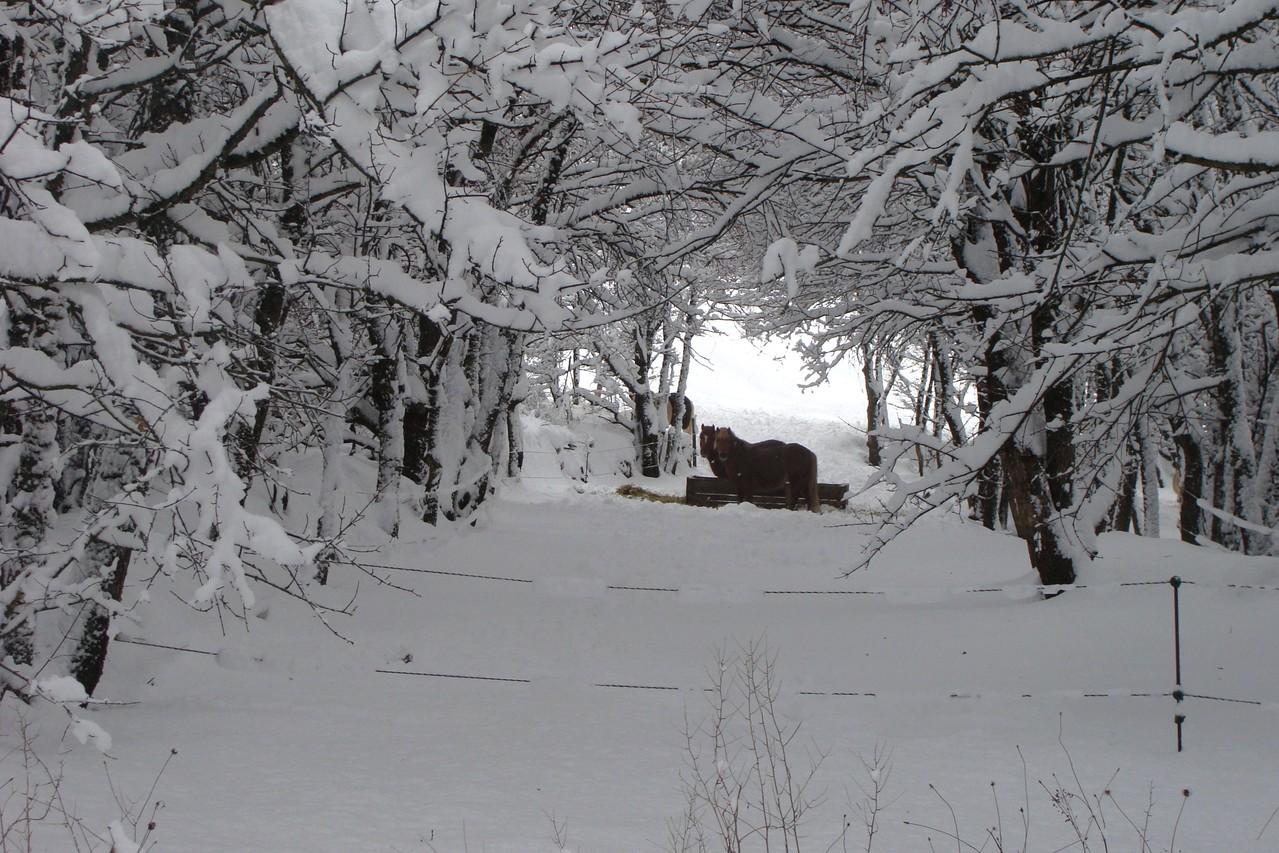 Vitality des Coeurs, sous un arche plein de neige