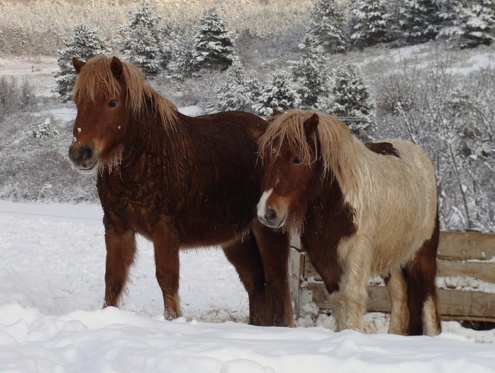 la neige : Vitality des Coeurs et Ambre de Liubov